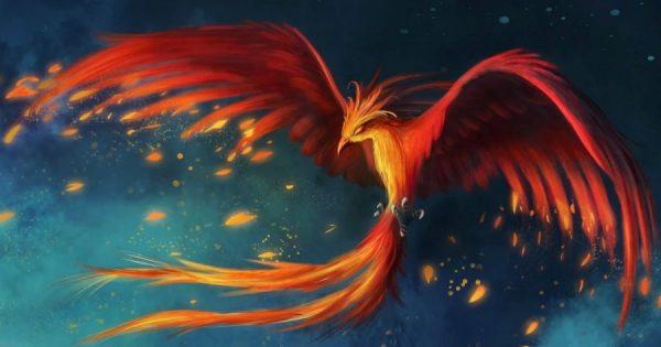 harna phoenicia 3